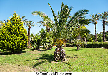 Palm Garden in front of house