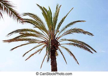 palm, groene