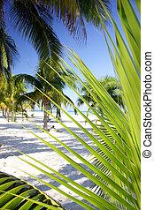 Palm Grove Foliage - Palm tree foliage on tropical beach