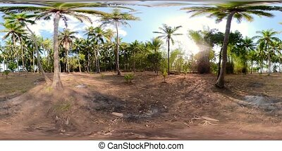 palm grove in asia vr360 - vr360 palm grove on sunny day....