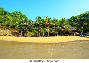 palm grove on a small beach with yellow sand.