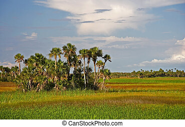 Palm Hammock, Big Cypress National Preserve, Florida...