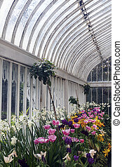 Palm House in Belfast