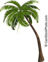 palm, illustration, bakgrund, vektor, träd.