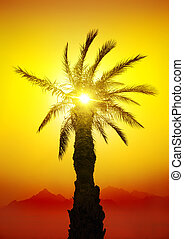 Palm in desert