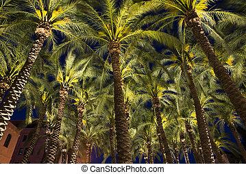 Palm in Jerusalem