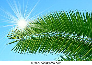 palm in sunlight