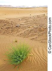 in the desert oasi morocco sahara