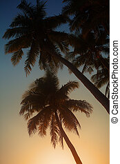 Palm in the sunset