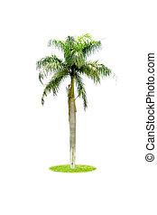 Palm isolated on white background