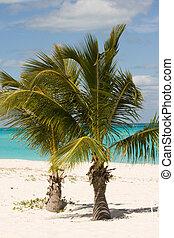 palm, jonge, bomen