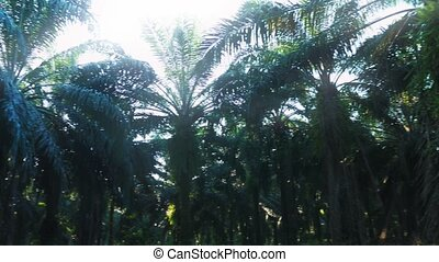Palm Jungle Panorama, Costa Rica, Graded Version - Graded...