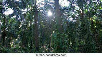 Palm Jungle Panorama, Costa Rica, Native Version - Native...
