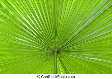 Extreme close-up image of a palm leaf-useful natural background image.