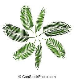 Palm Leaf  Background Vector Illustration