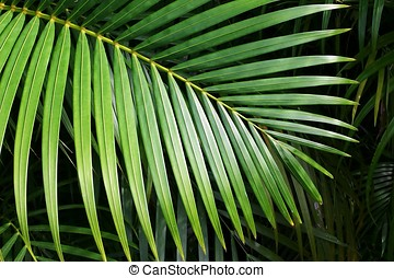 Palm leaf close up.
