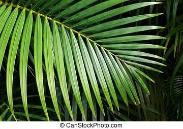 Palm leaf close up.