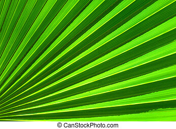 Palm leaf closeup green abstract background