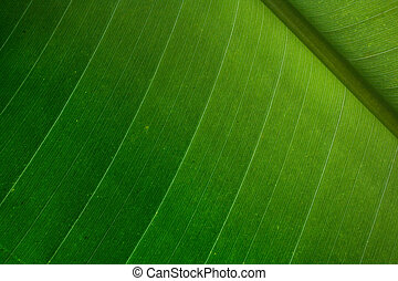 Palm leaf detail - Green palm leaf detail - nice natural...
