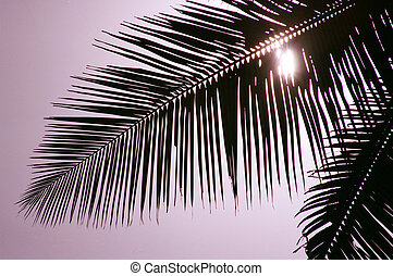 Palm Leaf Hiding the Sun - Backlit palm leaf.