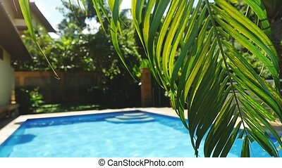 Palm leaf in front of the swimming pool on a tropical resort...