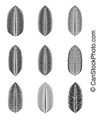 Palm Leaf Isolated Vector Illustration