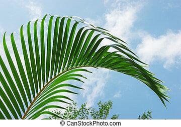 palm leaf on a background sky