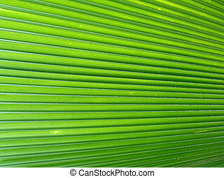 Palm Leaf - palm leaf in the caribbean