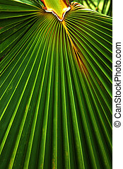 Close up of a Palm Leaf