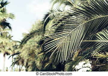Palm leaf plant. Creative, minimal, styled concept for bloggers.