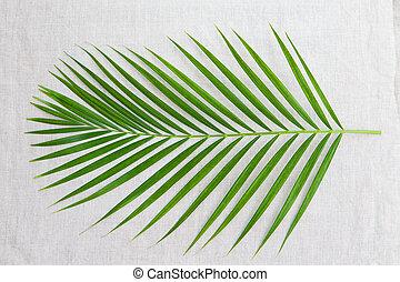 Palm leaf. Textile background. Top view Copy space