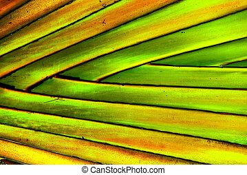 Palm leaf texture, closeup macro