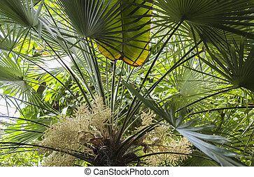 palm leaf under the sun