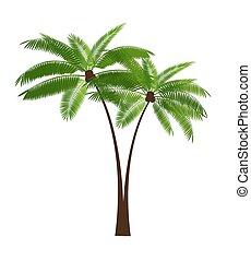 Palm Leaf Vector Illustration