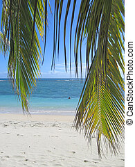 Palm leafs and blue sea from Nattes island, Nosy Boraha, Sainte,Marie island, Madagascar