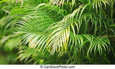 palm leafs in the rain