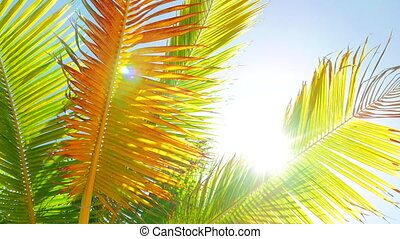 Palm Leafs Swinging in the Wind - Look at a palm leafs and a...
