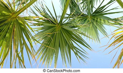 Palm leaves against blue sky