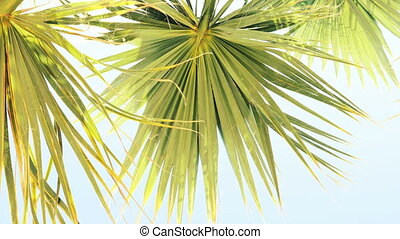 Palm leaves against sky