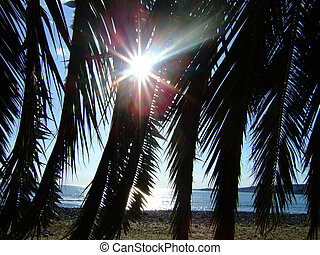 Palm leaves and sun