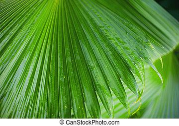 Palm leaves background, beautiful tree horizontal photo , Palm Sunday symbol