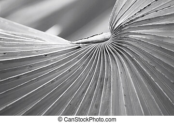Palm leaves background - black and white