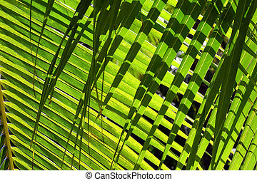 Palm leaves background with shadow