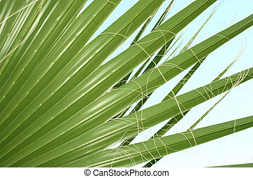 Big palm leaves texture as a nice background.