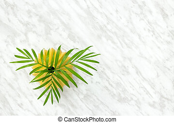 Palm leaves in a ceramic vase on marble background