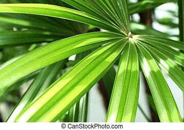 palm leaves in nature