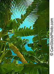 Palm leaves in the sky