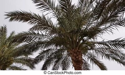 Palm leaves in the wind on a cloudy day.