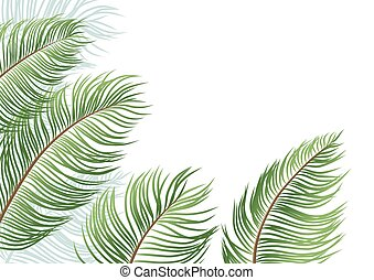 Palm leaves isolated on white background vector illustration