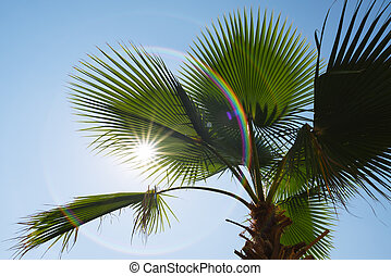 Palm leaves on a background of blue sky and sun